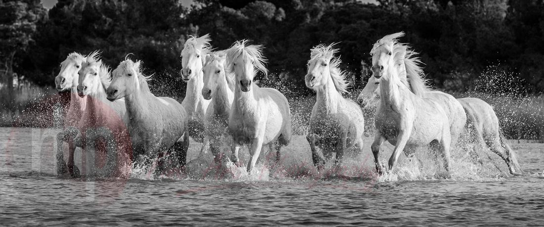 Stallions of the Camargue. International Photography Awards Winner 2016.